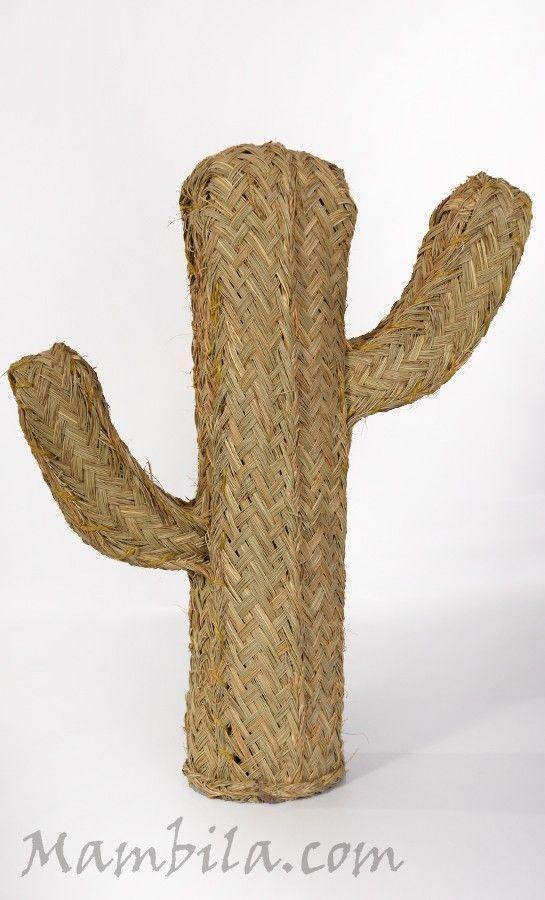 cactus esparto pequeito